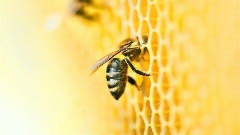 DENSO и устойчивое развитие: проект Honeybee